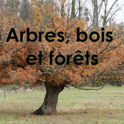 Arbres bois forets