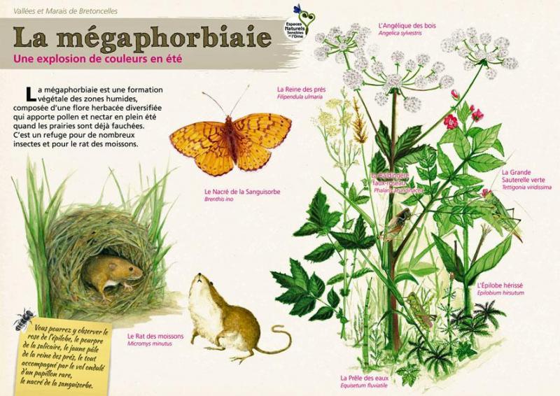 La megaphor 1